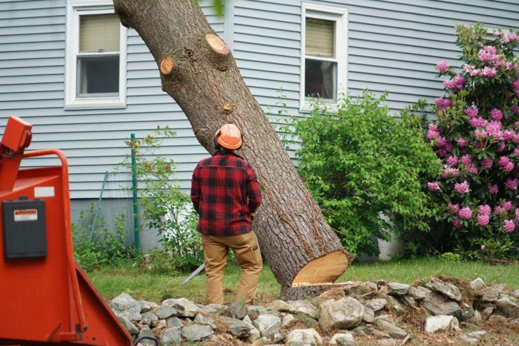 cheap tree cutting service near me