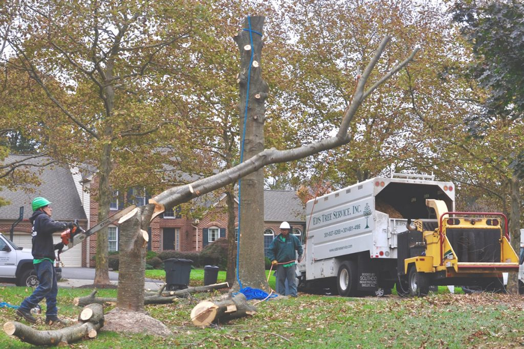 tree-service-in-city