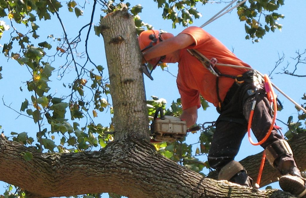 tree care services near me